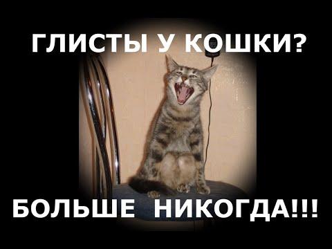 Как избавить кошку и котят от глистов быстро.