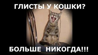 Как избавить кошку и котят от глистов быстро .