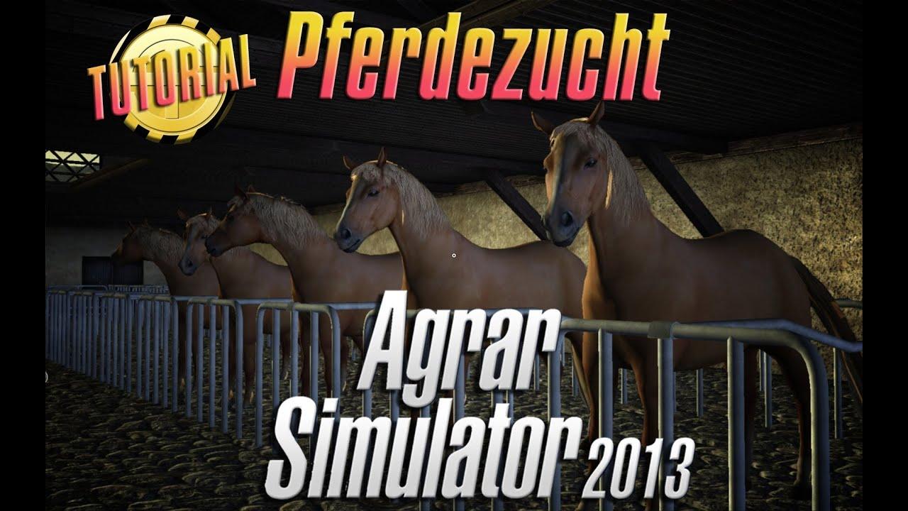 pferdezucht spiel