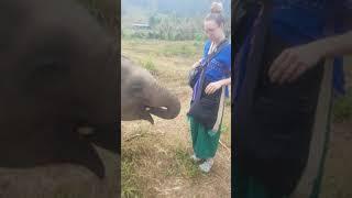 태국 아기 코끼리의 코놀림(?) | Baby eleph…