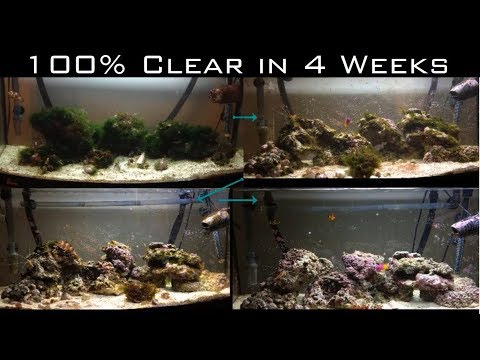 How To Rescue A Marine Reef Aquarium From Algae