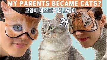 고양이 수면안대를 본 고양이 반응은?