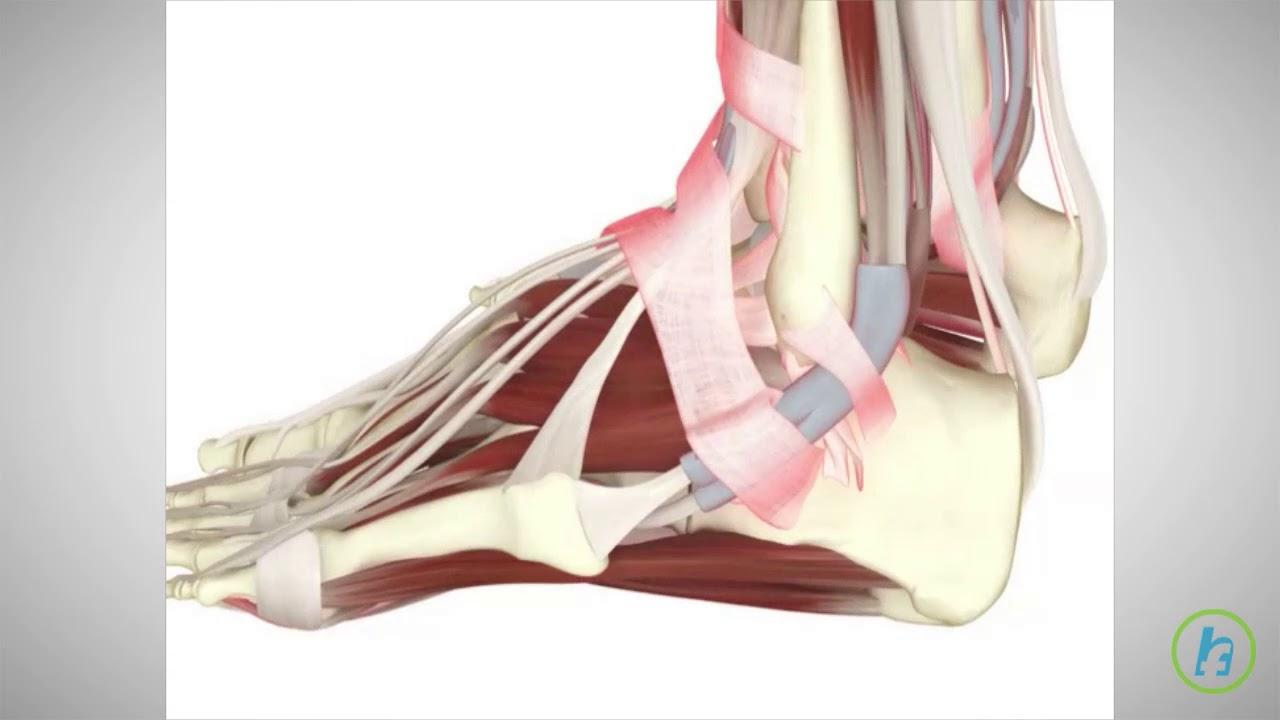 articulațiile mușchiului tendonului Schwarzenegger are boală articulară