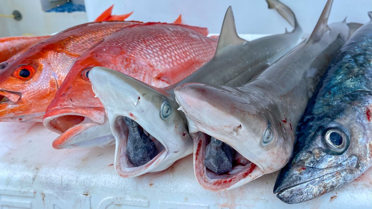 Shark, Snapper, Kingfish! Catch Clean Cook (Deep Sea Fishing)