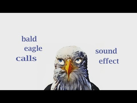 how a bald eagle calls sound effect animation youtube. Black Bedroom Furniture Sets. Home Design Ideas