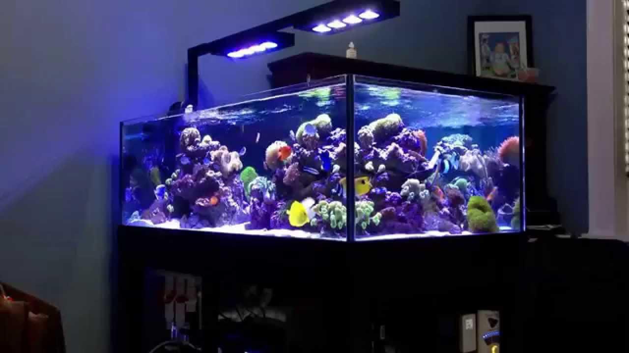 Deep Blue Professional 80 Rimless Reef Tank Youtube