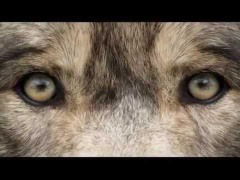 Охота на волка. Выпуск 149. Эфир от 11.02.14.
