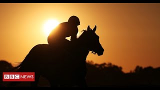 Thousands of racehorses killed in UK and Ireland slaughterhouses - BBC News