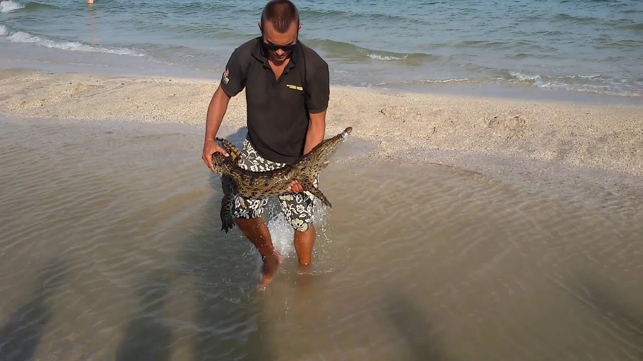 Крокодил на пляже 57