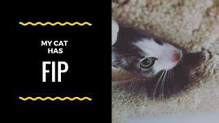 My Cat has Fip, now what