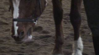 Walk Trot Lesson on a green 6 year old 15.3 Grand prix horse