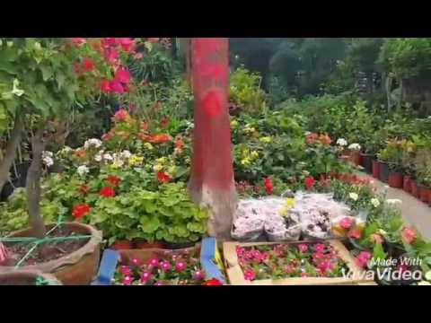 Green Garden Abu Dhabi. Mina Zayed