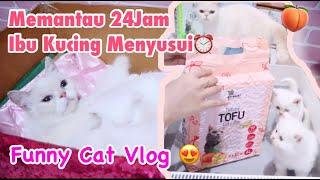 LAGI NYUSU DIGANGGUIN😅CCTV 1X24JAM WITH KUCING MENYUSUI & UNBOXING PASIR TOFU PEACH [ DAILY CAT ]