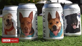How A Beer Can Helped Reunite A Woman With Her Dog