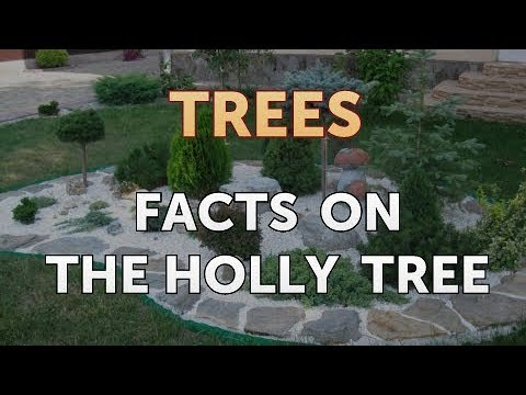 Facts On The Holly Tree