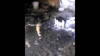 Кошек против собак )лучший бой с котом )