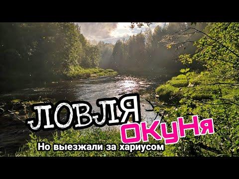 В поисках хариуса. Ловля окуня на речке в Ленинградской области.