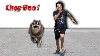 NTN - Thi Chạy Đua  Với Gấu ALaska ( Race with Dogs Alaska )