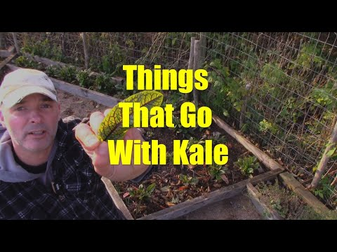 Things That Go With Kale