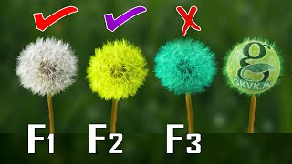 BIGGEST MISTAKE! SEED PURCHASE - F1 F2 F3 HYBRID SEEDS? | POLLINATION SEED SAVING