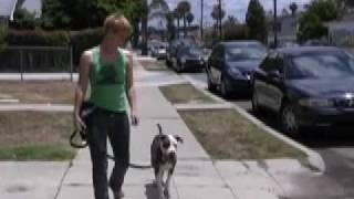 Leash Walking- Equipment Tips