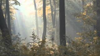 Wedding Music - Johann Sebastian Bach, Air on the G String (Clarinet and piano)