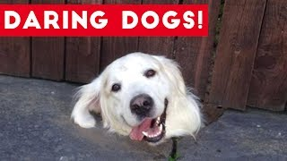 Funniest Daring Dog & Escape Animal Videos Weekly Compilation 2017 | Funny Pet Videos
