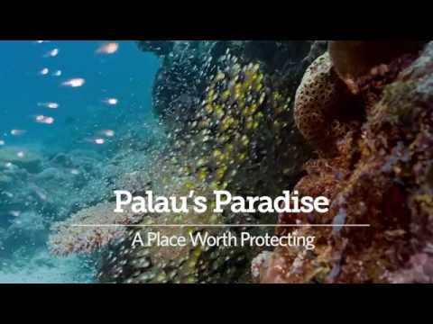 Palau's Paradise: Ocean Wonders Worth Protecting