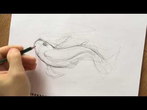 Sketch Of Koi Fish. The Full Drawing Process