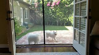 Dogs think they're trapped by a mesh door