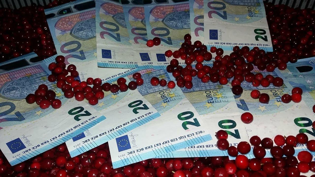Заработок в Финляндии или сколько можно заработать на сборе ягоды