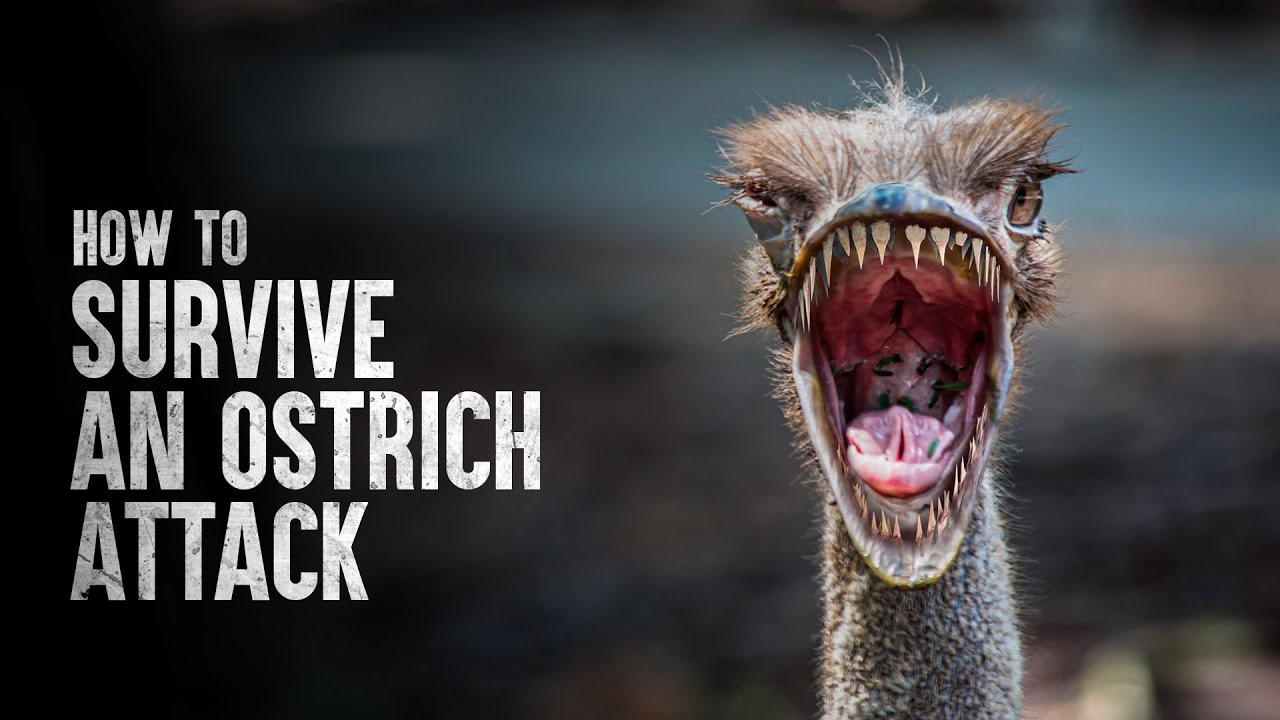 How to Survive an Ostrich Attack