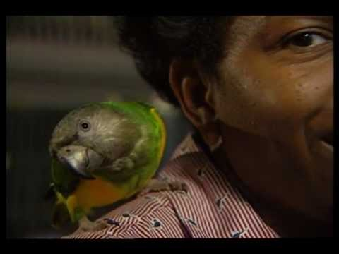 Parrots as Pets: Trials, Tribulations & Rewards