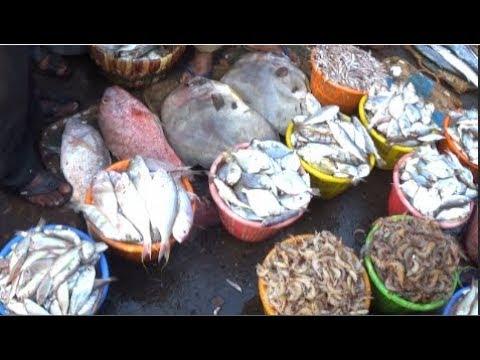 FISHING HARBOUR Of Visakhapatnam (Vizag), Andhra Pradesh, India (Part 3) |  Fish Videos Of India