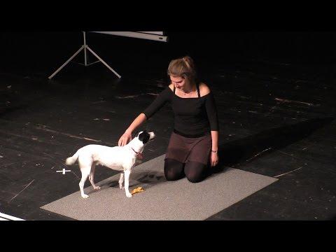Maja Nowak Hundeliveshow Detmold am 9.12.2016 - Jack Russel: Nando