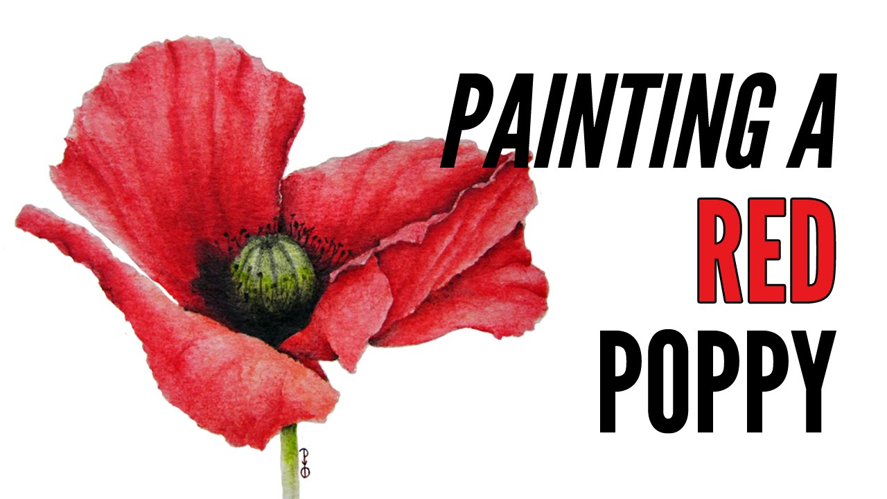 How to paint a poppy with inktense in red youtube - How to paint poppy flowers ...
