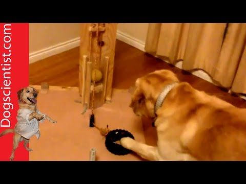 Smart Dog vs Pulley System
