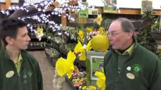 March Gardening Tips @ The Old Railway Line Garden Centre - The Flower Garden