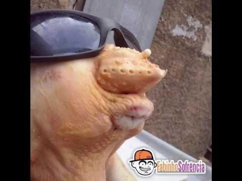 жопка куриная фото