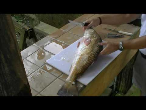 How to Clean Big Redfish Quickly