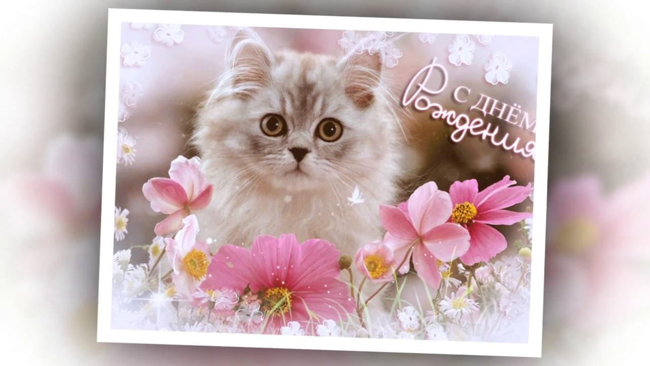 жизнь открытка сестре с котами одна знакомая риты