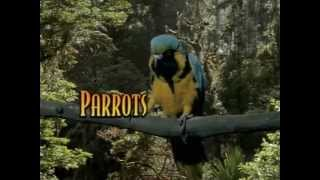Parrots - Look Who's Talking [THE COMPLETE DOCUMENTARY] thumbnail