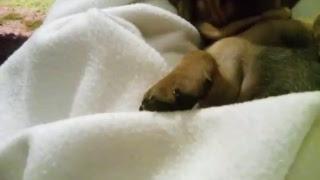 щенок в прямом эфире