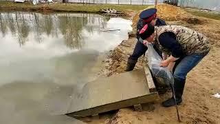 Зеркальный карп для своего пруда