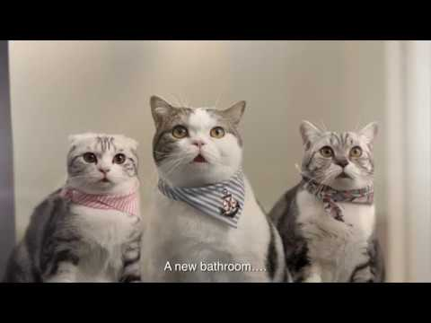 Tortured Cats Plan Revolt | No More Baths | Funny Bathroom Ad