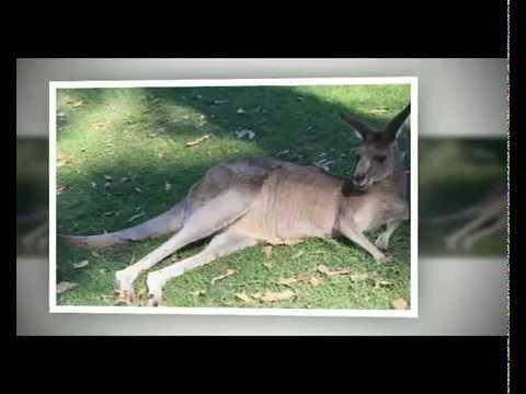 Lone Pine Koala Sanctuary review | zoo in Brisbane Australia
