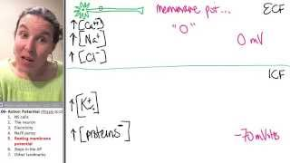 what is resting membrane potential