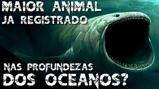 MAIOR ANIMAL JA REGISTRADO NAS PROFUNDEZAS DOS OCEANOS?