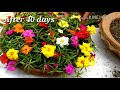 How to Grow PORTULACA from Seeds.