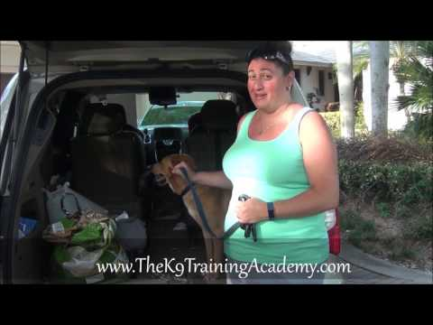 Reviews on The K9 Training Academy